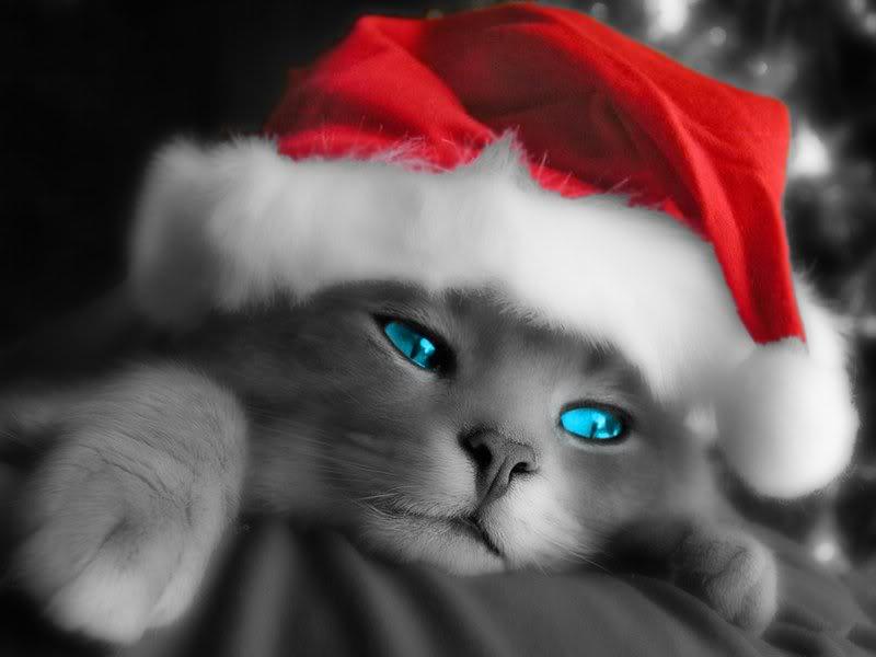 Cat Blue